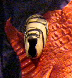 Tiger Stripe Baby Shoe